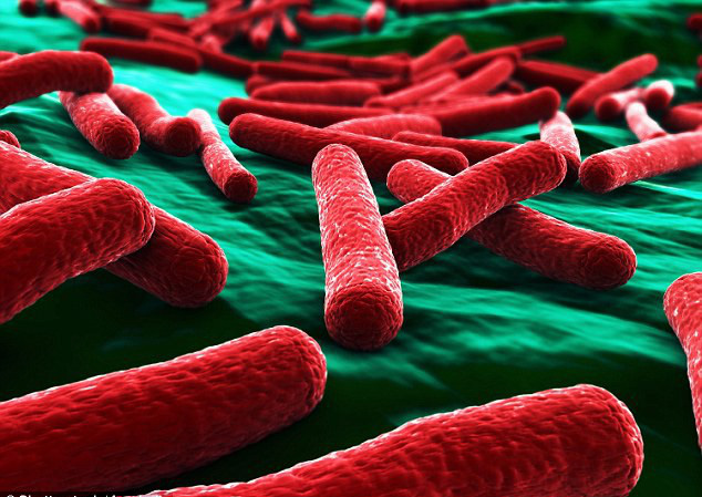 Kinh hãi: Vi khuẩn E.coli được tìm thấy trong hầu hết những túi đồ trang điểm của phái đẹp - Ảnh 2.