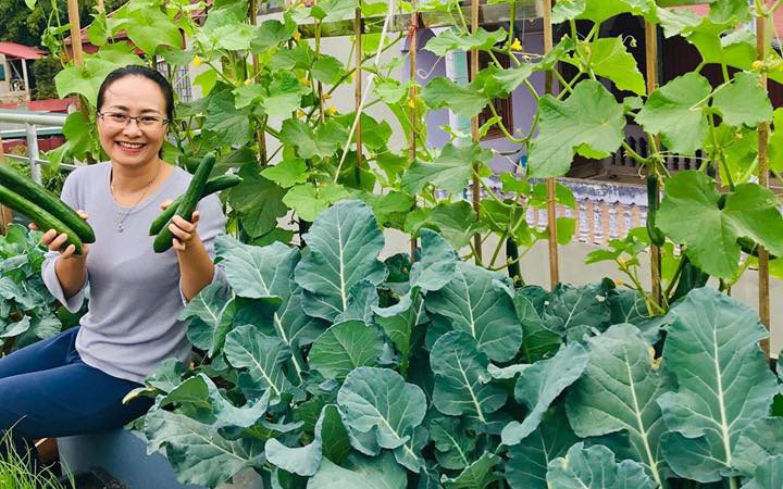 Sân thượng 50m² với rau xanh và quả ngọt đẹp như tranh vẽ của gia đình 4 người ở Sơn La