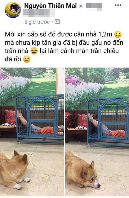 Cậu bé hồn nhiên chiếm dụng chuồng của chú chó, nhưng đây mới là điều khiến dân mạng cười muốn té ghế - Ảnh 2.