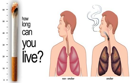 Những cơ quan bị tổn thương bởi thuốc lá ngoài phổi - Ảnh 1.