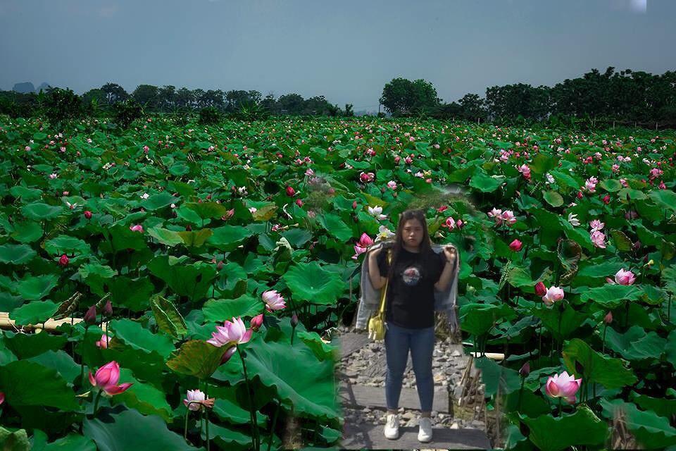 """Trời 38 độ hí hửng lên vườn hướng dương chụp hình thơ mộng, cô nàng bị cư dân mạng chế ảnh đi muôn nơi: """"Nắng thế này hoa héo hết rồi, chị hiểu hông?"""" - Ảnh 9."""