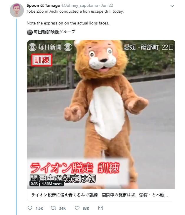 """Mặc trang phục sư tử để tập huấn thú xổng chuồng như thiệt, đoạn clip gây xôn xao nhưng biểu cảm của con vật """"hàng thật"""" mới đáng chú ý hơn - Ảnh 6."""