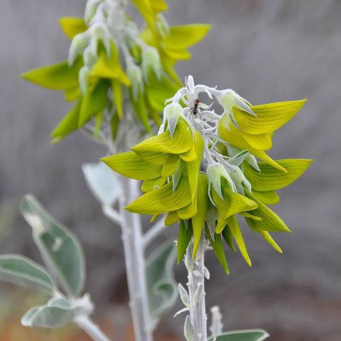 flower-like-hummingbird-green-birdflower-16-5d120c0de7a59__700