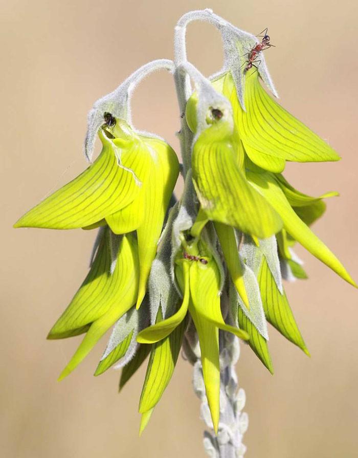 flower-like-hummingbird-green-birdflower-2-5d120bec7a963__700