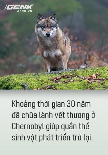 Từ địa ngục, Chernobyl nay trở thành thiên đường cho các loài động vật, có phải con người mới đáng sợ hơn cả hạt nhân? - Ảnh 10.