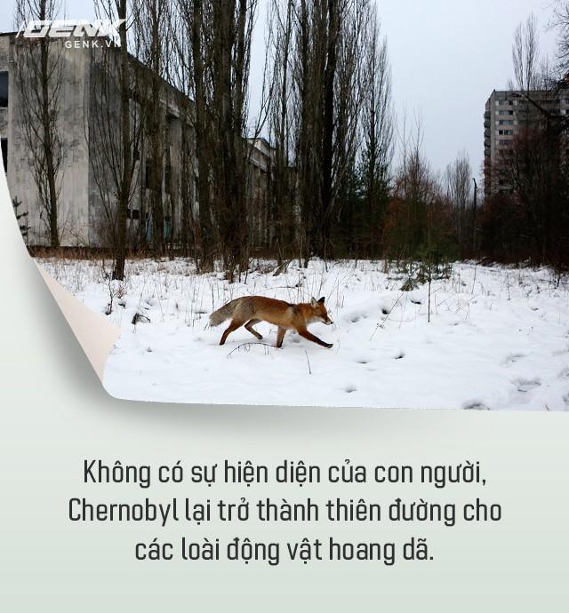 Từ địa ngục, Chernobyl nay trở thành thiên đường cho các loài động vật, có phải con người mới đáng sợ hơn cả hạt nhân? - Ảnh 4.