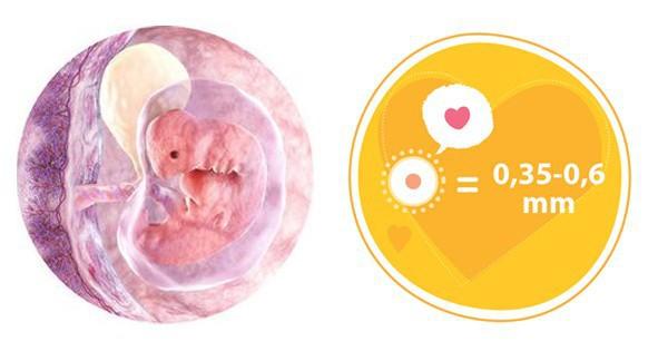 Biểu hiện mang thai ở tuần thứ 4 tháng đầu tiên thai kỳ đã bắt đầu rõ rệt - Ảnh 4.