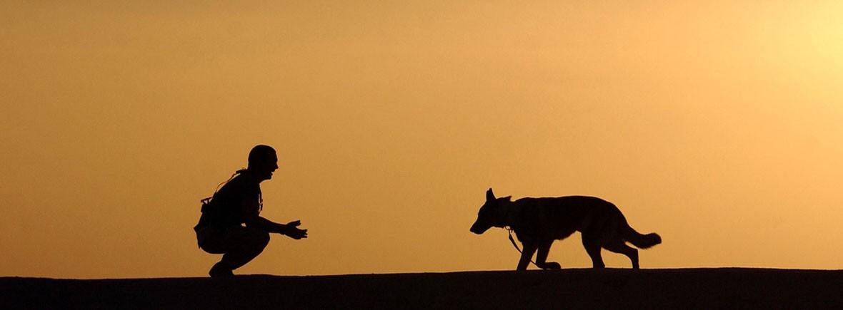 sunset-dog