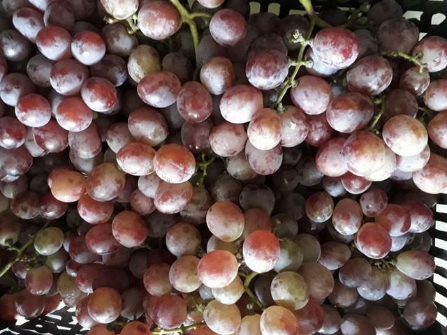 Những loại hoa quả Việt Nam đã hết mùa nhưng hàng Trung Quốc vẫn bán nhan nhản - Ảnh 2.