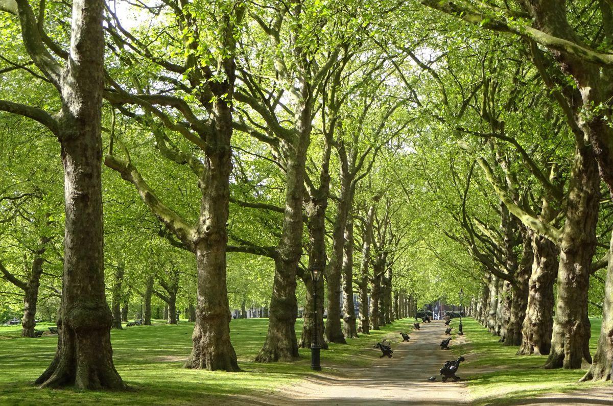 Nghiên cứu dành cho hội thừa cân: Cách dễ nhất để loại bỏ cảm giác thèm ăn chính là sống ở nơi có nhiều cây xanh - Ảnh 1.