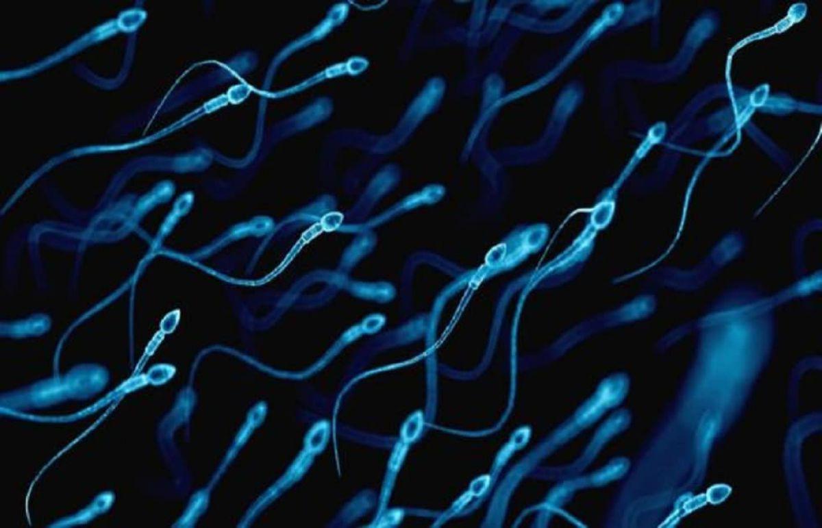 Tình trạng đáng báo động của đàn ông Việt: Tinh trùng vừa yếu, vừa thiếu - Ảnh 2.