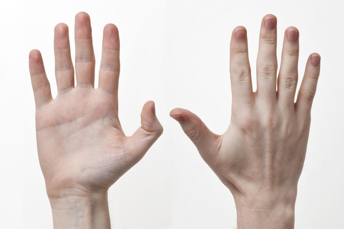 Human-Hands-Front-Back