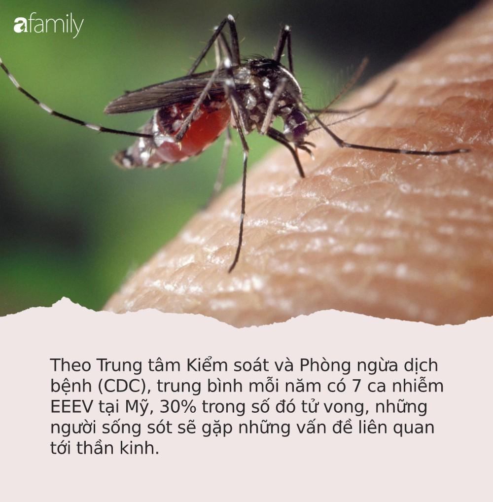 Cảnh báo: Phát hiện loại virus gây sưng màng não lây qua đường muỗi đốt - Ảnh 1.
