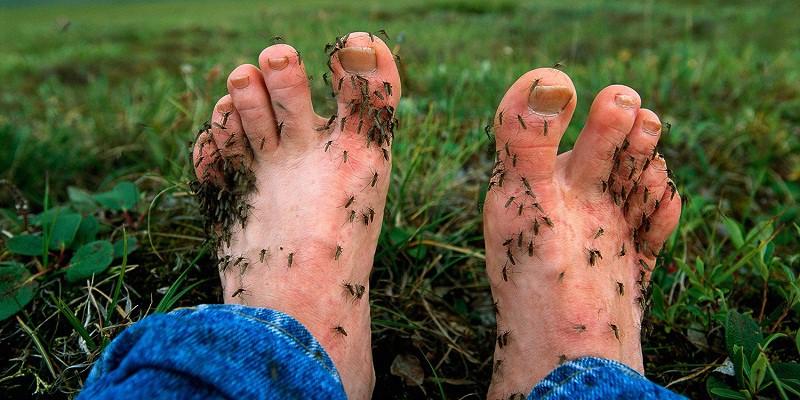 Cảnh báo: Phát hiện loại virus gây sưng màng não lây qua đường muỗi đốt - Ảnh 3.