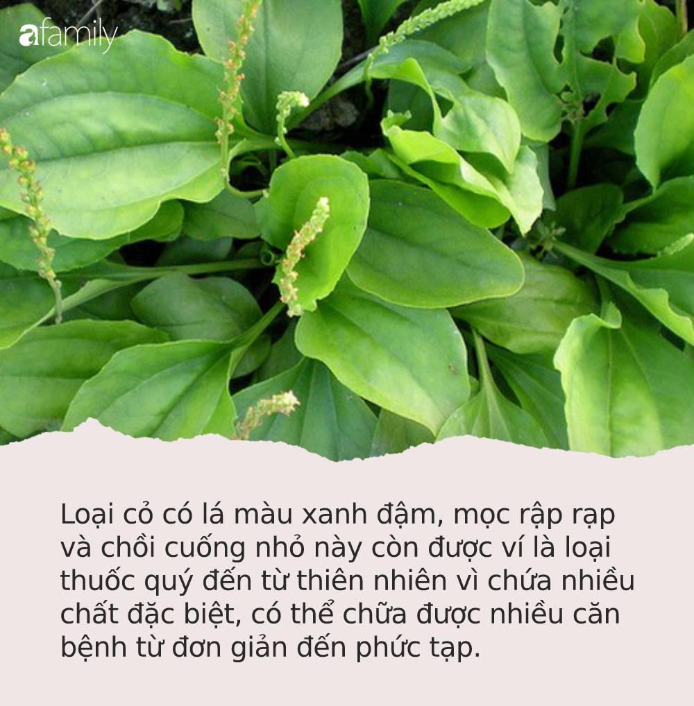 """Loại cỏ """"siêu quyền lực"""" mọc hoang ở Việt Nam: Giúp cai nghiện thuốc lá, tận diệt tế bào ung thư và nhiều bệnh khác - Ảnh 1."""