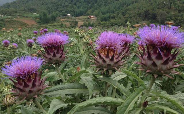 Những loại quả, thảo dược vừa giải độc gan vừa đẹp da lại tốt cho sức khỏe - Ảnh 4.