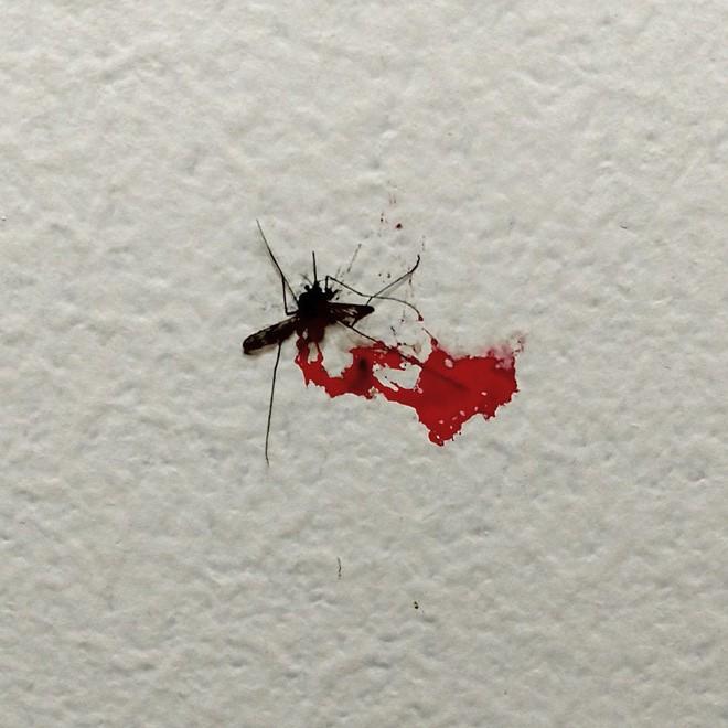 Kết hợp 2 kỹ thuật diệt muỗi bí truyền, các nhà khoa học triệt tiêu được 94% lượng muỗi tại hai hòn đảo Trung Quốc - Ảnh 2.