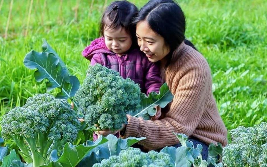 Mẹ Việt quyết tâm trồng cả vườn rau quả sạch, sống xanh để hai con có tuổi thơ an lành