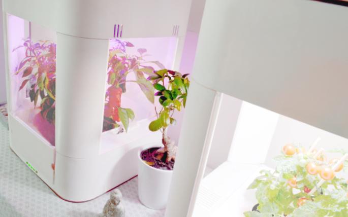 Sống ở thành phố không có đất vẫn đủ rau củ quả ăn hàng ngày nhờ chậu trồng cây thông minh ngay trong nhà