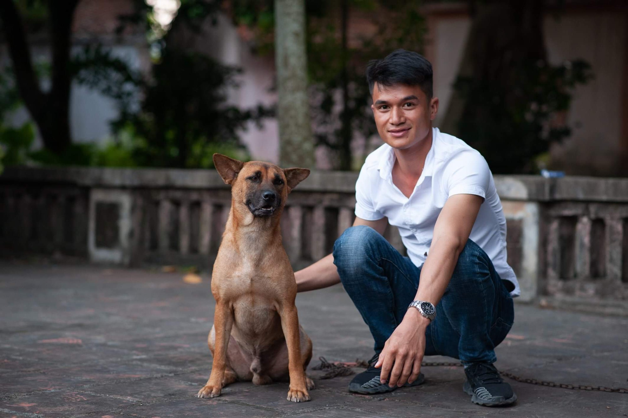 Phim Cậu Vàng chính thức chọn ra 3 chú chó làm diễn viên chính, chó Nhật sẽ đảm nhận những cảnh tâm trạng - Ảnh 3.