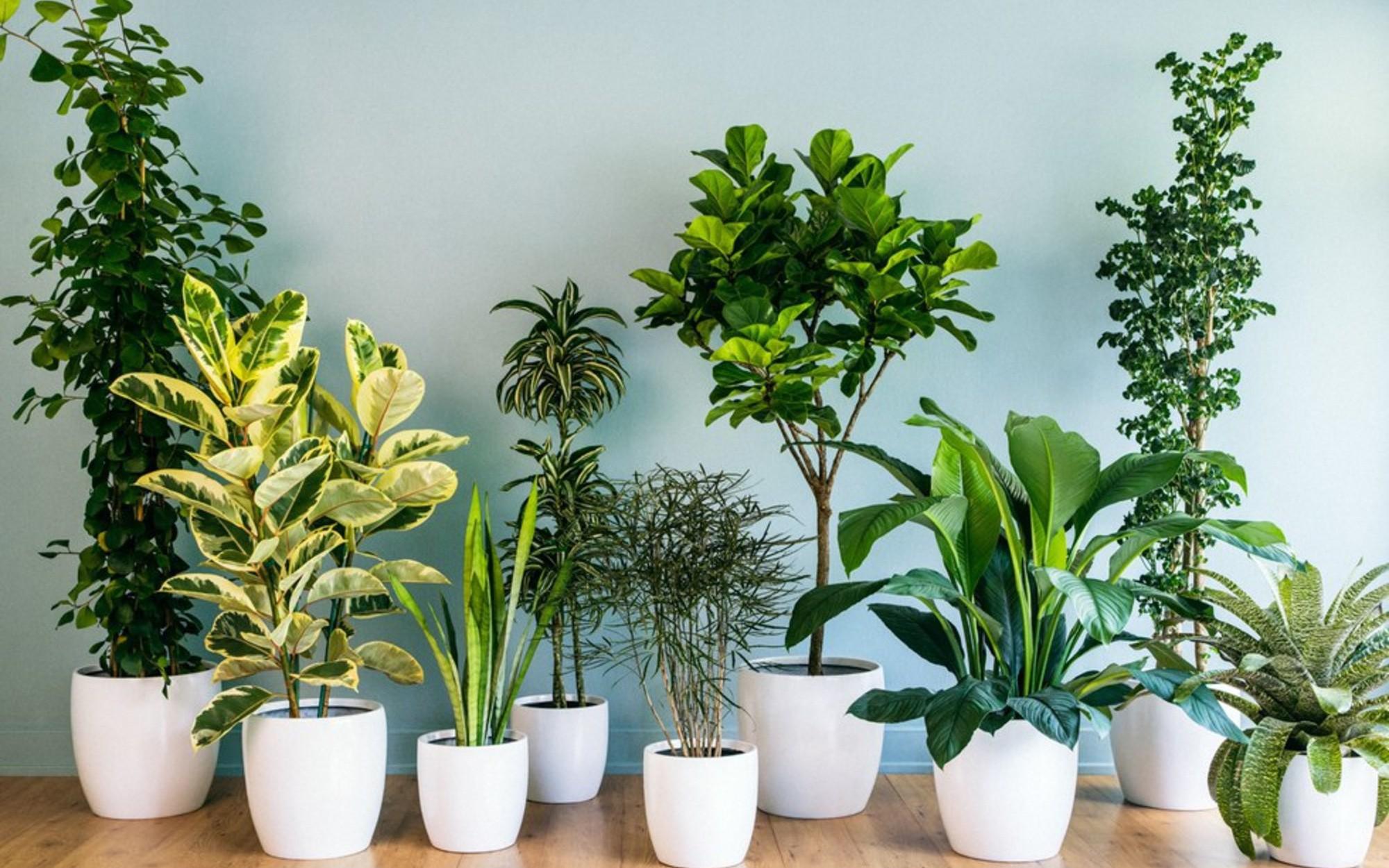 """10 loại cây cảnh không cần quá nhiều nắng lại chịu được điều hòa, """"cứu tinh"""" của nhà chung cư là đây"""