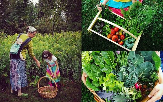 Mẹ bỉm sữa bận rộn chăm 6 người con vẫn tạo ra khu vườn xum xuê cây trái, rực rỡ sắc màu