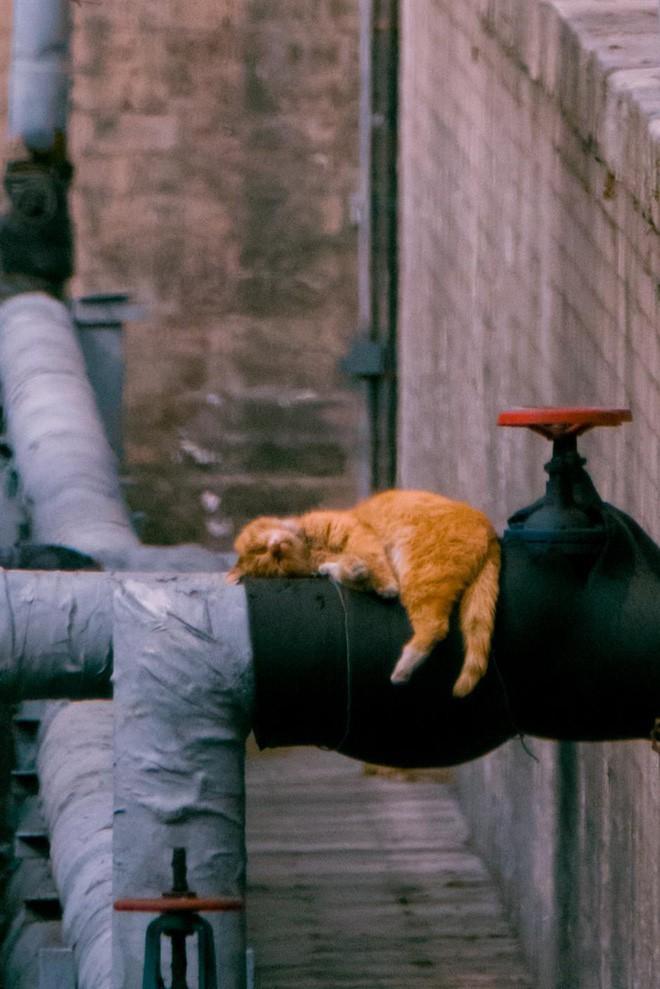Câu chuyện về chàng kỹ sư bỏ nghề rồi cuốc bộ 30.000 bước mỗi ngày để cho ra những tấm ảnh mèo đẹp đến xiêu lòng - Ảnh 6.