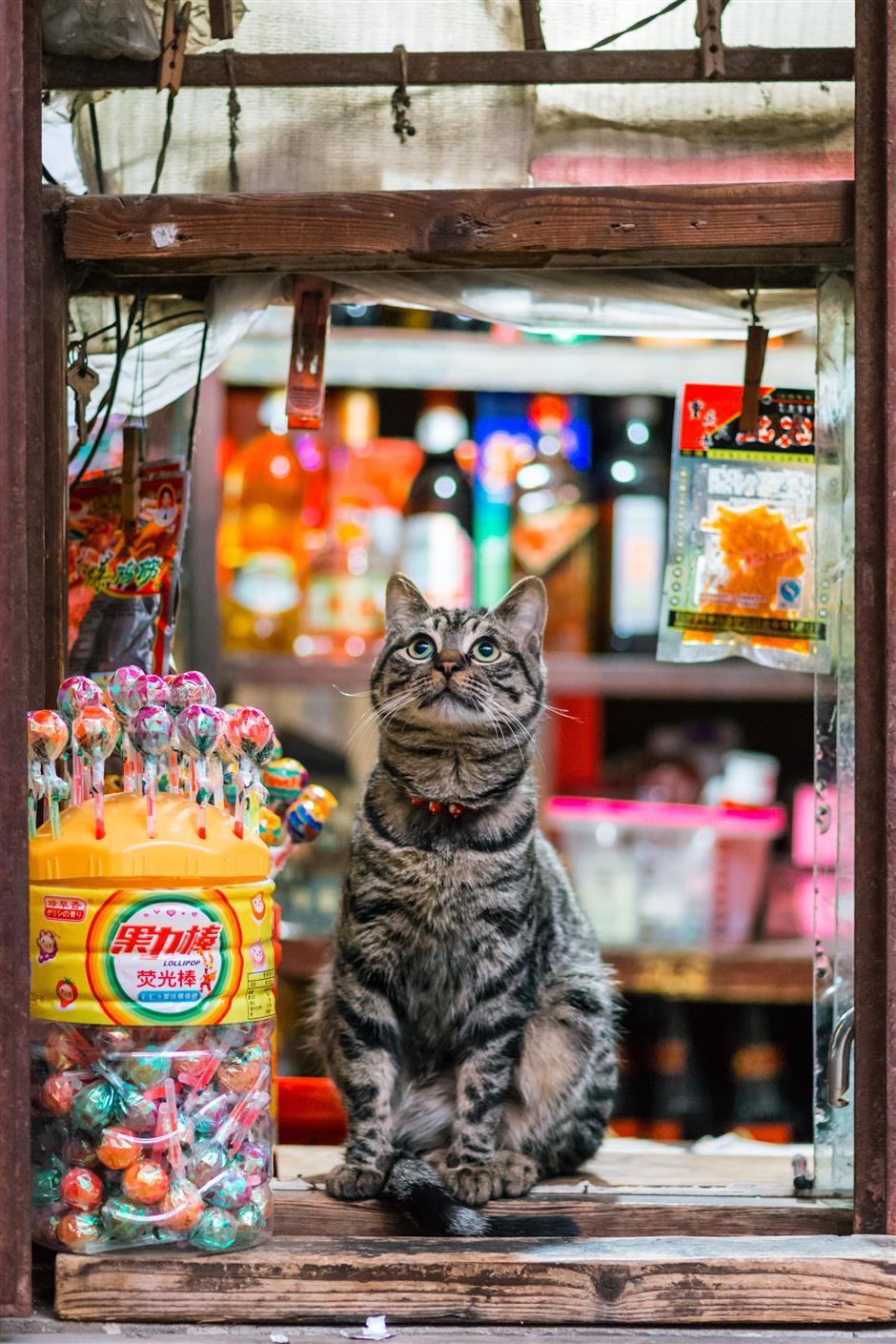 Câu chuyện về chàng kỹ sư bỏ nghề rồi cuốc bộ 30.000 bước mỗi ngày để cho ra những tấm ảnh mèo đẹp đến xiêu lòng - Ảnh 12.