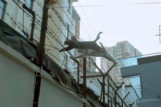 Câu chuyện về chàng kỹ sư bỏ nghề rồi cuốc bộ 30.000 bước mỗi ngày để cho ra những tấm ảnh mèo đẹp đến xiêu lòng - Ảnh 2.