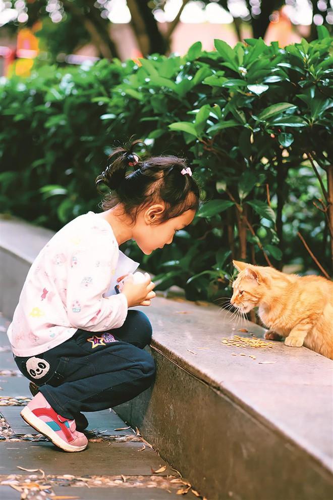 Câu chuyện về chàng kỹ sư bỏ nghề rồi cuốc bộ 30.000 bước mỗi ngày để cho ra những tấm ảnh mèo đẹp đến xiêu lòng - Ảnh 7.