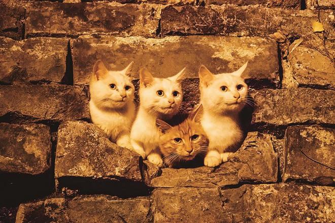 Câu chuyện về chàng kỹ sư bỏ nghề rồi cuốc bộ 30.000 bước mỗi ngày để cho ra những tấm ảnh mèo đẹp đến xiêu lòng - Ảnh 3.