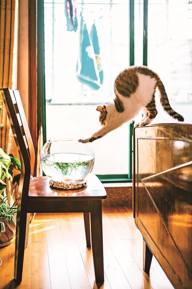 Câu chuyện về chàng kỹ sư bỏ nghề rồi cuốc bộ 30.000 bước mỗi ngày để cho ra những tấm ảnh mèo đẹp đến xiêu lòng - Ảnh 4.