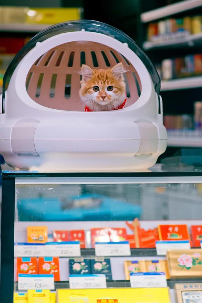 Câu chuyện về chàng kỹ sư bỏ nghề rồi cuốc bộ 30.000 bước mỗi ngày để cho ra những tấm ảnh mèo đẹp đến xiêu lòng - Ảnh 9.
