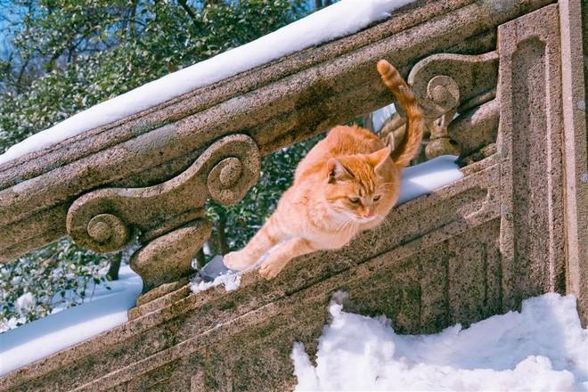 Câu chuyện về chàng kỹ sư bỏ nghề rồi cuốc bộ 30.000 bước mỗi ngày để cho ra những tấm ảnh mèo đẹp đến xiêu lòng - Ảnh 10.
