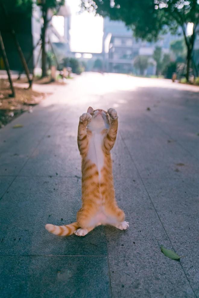 Câu chuyện về chàng kỹ sư bỏ nghề rồi cuốc bộ 30.000 bước mỗi ngày để cho ra những tấm ảnh mèo đẹp đến xiêu lòng - Ảnh 11.