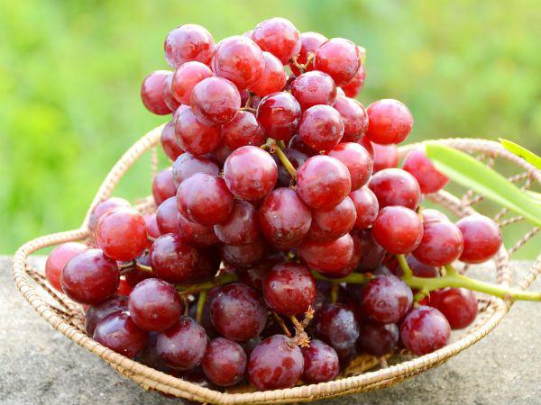 10 loại trái cây siêu tốt cho sức khỏe, chuyên gia khuyên hãy bổ sung thường xuyên trong năm mới - Ảnh 5.
