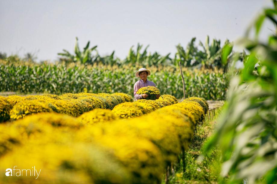 """""""Ngất lịm"""" giữa hàng chục cánh đồng cúc mâm xôi rộng bạt ngàn ở một trong những ngôi làng ăn Tết sớm nhất cả nước - Ảnh 5."""