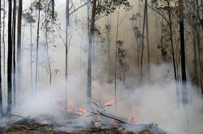 Australia chi 34 triệu USD cứu động vật hoang dã và môi trường - Ảnh 1.