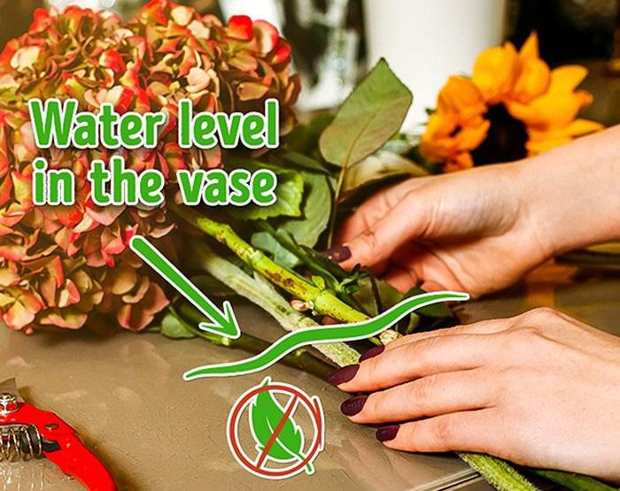 Mẹo giúp hoa nở nhanh, lâu tàn và đẹp nhất chuẩn bị đón Tết - Ảnh 6.