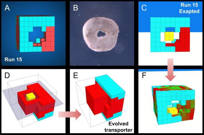 Đột phá: Các nhà khoa học vừa tạo ra một dạng sống hoàn toàn mới trên Trái Đất - Ảnh 7.