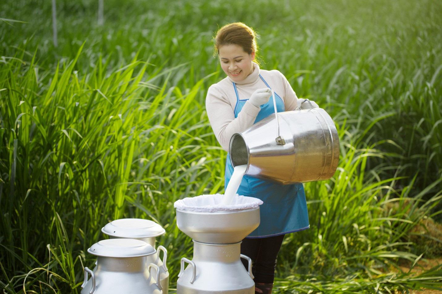 Sữa tươi Cô Gái Hà Lan kiểm soát độ an toàn hàng đầu nhờ cách nuôi bò đặc biệt - Ảnh 2.