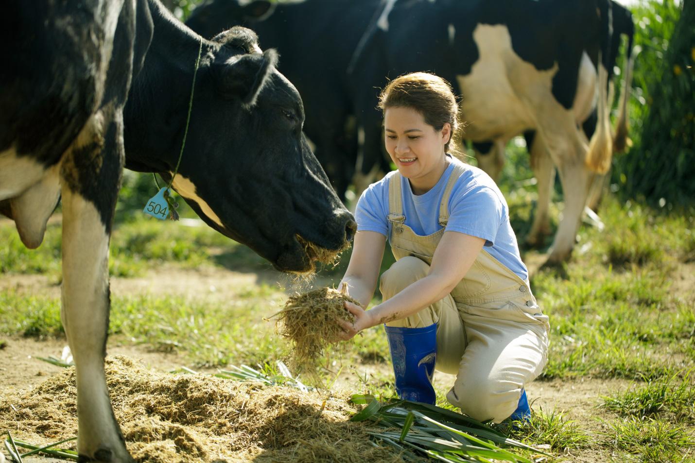 Sữa tươi Cô Gái Hà Lan kiểm soát độ an toàn hàng đầu nhờ cách nuôi bò đặc biệt - Ảnh 3.
