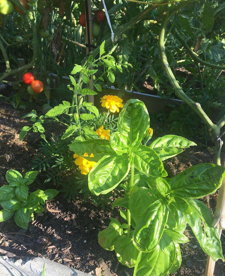 Khu vườn đầy ắp rau xanh và trái ngọt của người đàn ông yêu thích trồng trọt - Ảnh 8.