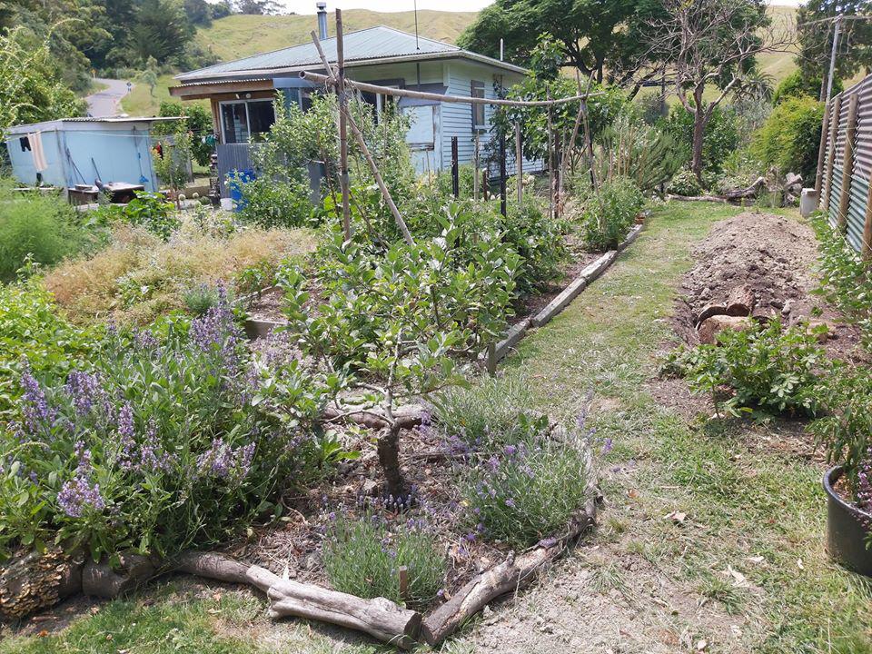 Khu vườn đầy ắp rau xanh và trái ngọt của người đàn ông yêu thích trồng trọt - Ảnh 7.