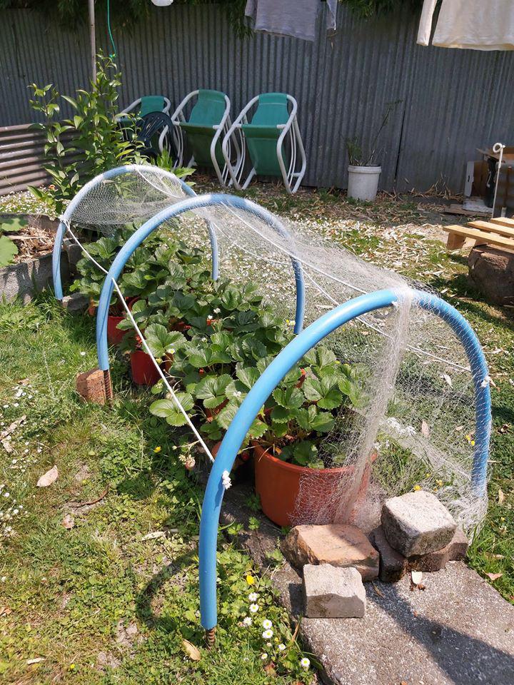 Khu vườn đầy ắp rau xanh và trái ngọt của người đàn ông yêu thích trồng trọt - Ảnh 4.