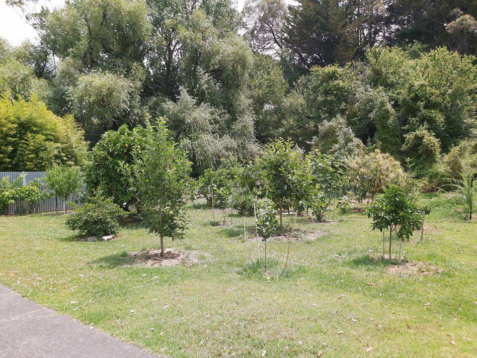 Khu vườn đầy ắp rau xanh và trái ngọt của người đàn ông yêu thích trồng trọt - Ảnh 3.