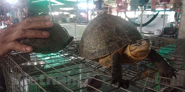 Thâm nhập thế giới ngục tù tàn sát động vật trong sách đỏ Việt Nam - Ảnh 1.