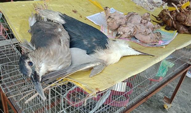 Thâm nhập thế giới ngục tù tàn sát động vật trong sách đỏ Việt Nam - Ảnh 3.