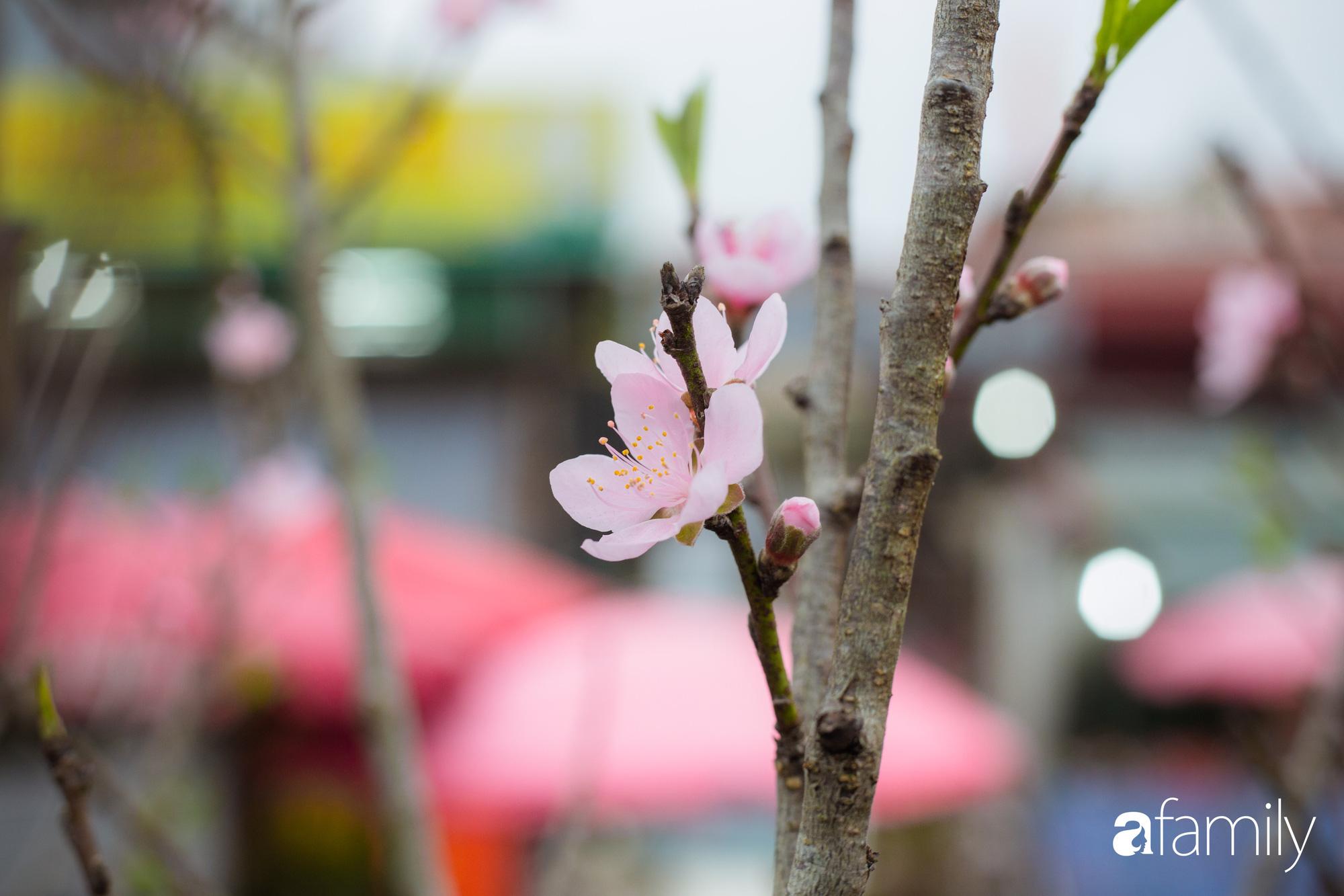 Những khoảnh khắc bình dị ngày cuối năm ở chợ hoa Quảng An, dù lạnh thấu xương nhưng người Hà Nội vẫn nô nức sắm hoa chơi Tết - Ảnh 10.