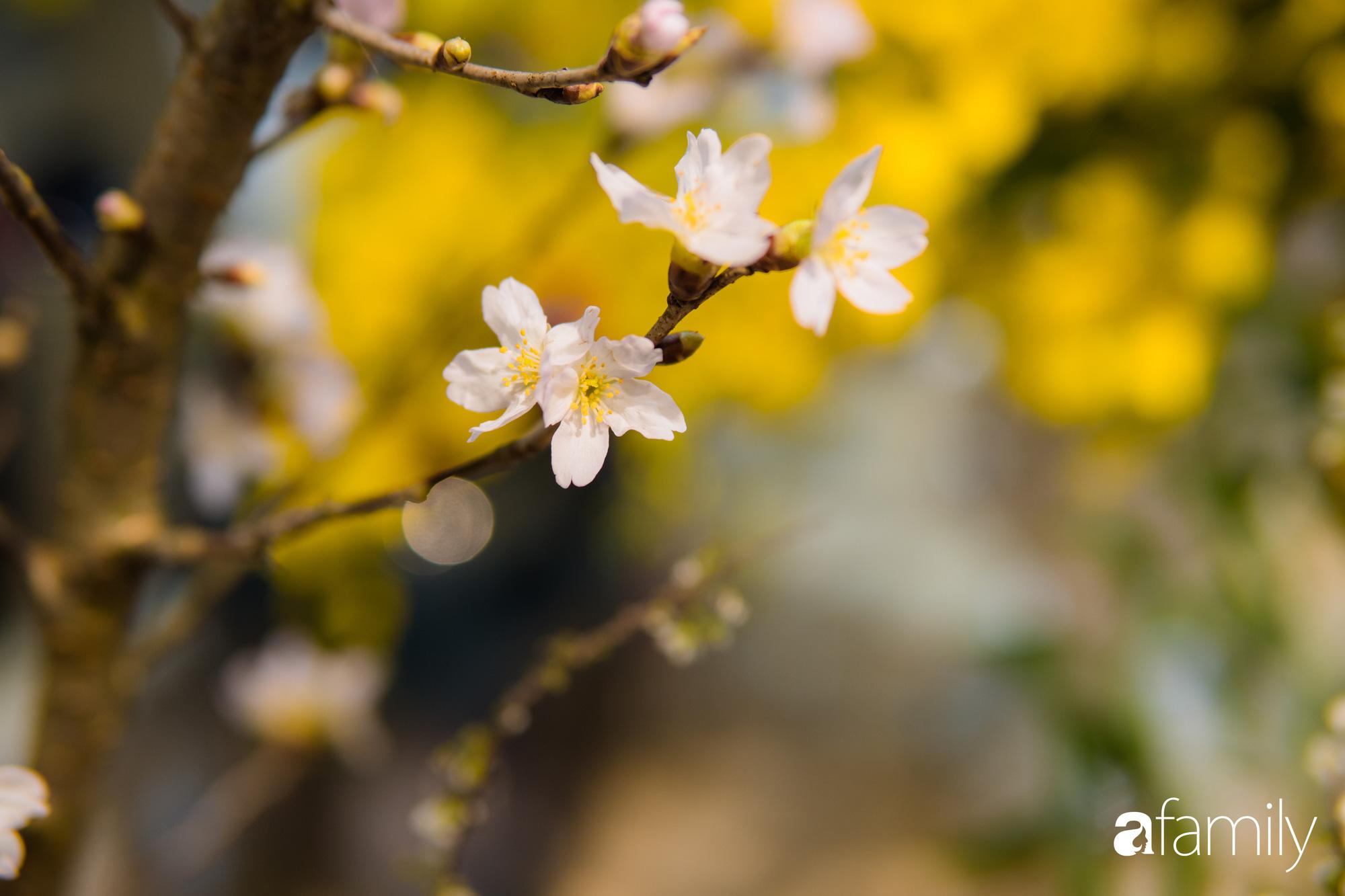 """Ngắm những loài hoa nhập khẩu đẹp lạ """"sang chảnh"""" để hiểu tại sao các đại gia Hà thành sẵn sàng chi 50 triệu sắm hoa đẹp chơi Tết - Ảnh 6."""